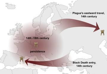 peste negra mapa