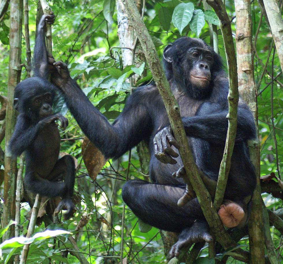 Definitely The Naked Ape