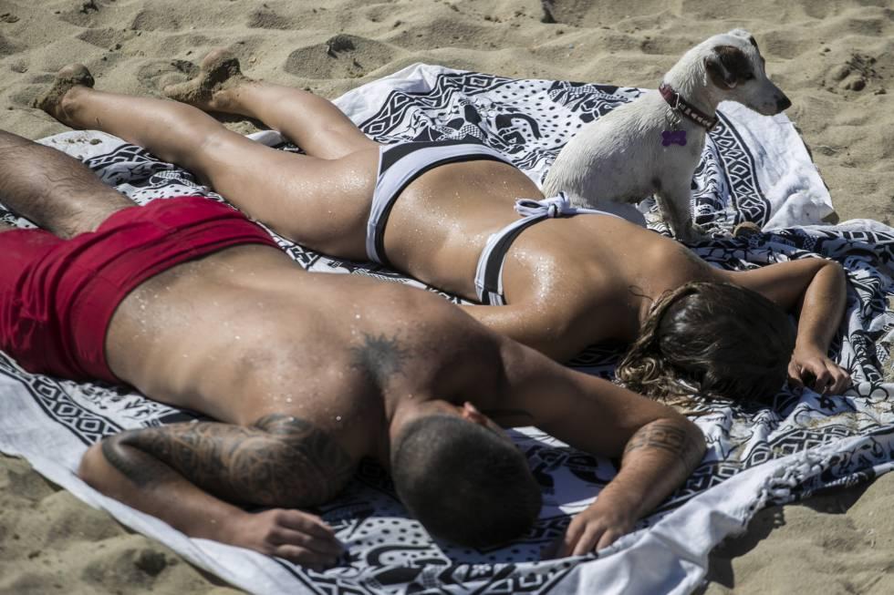 Una imagen de la nueva playa para perros de Barcelona.
