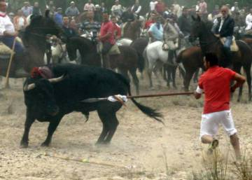 Tordesillas denied license to hold Toro de la Vega bull hunt this year