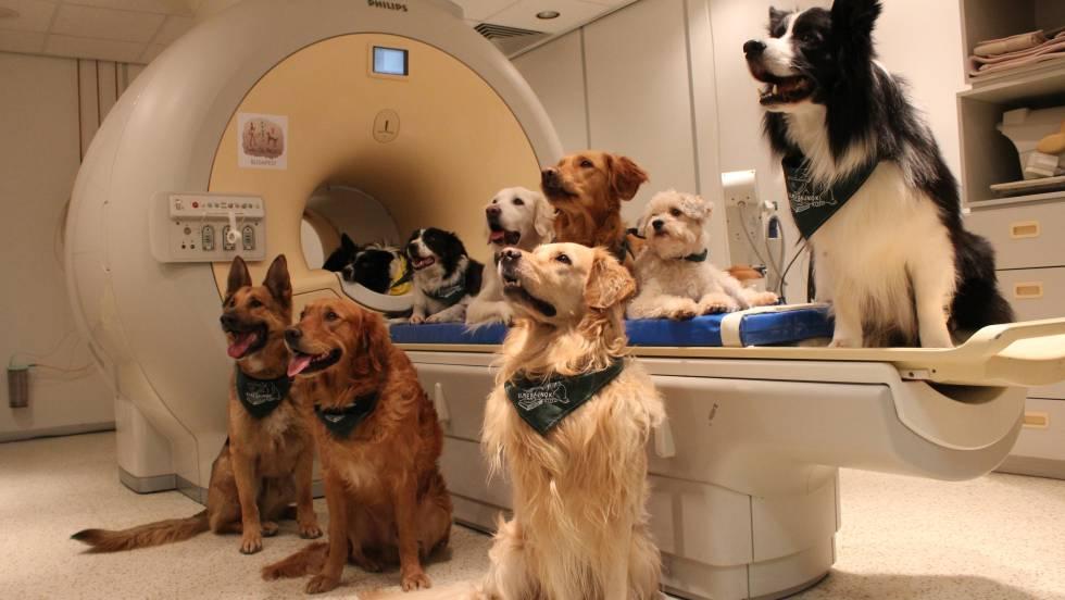 Los perros comprenden lo que decimos y cómo lo decimos