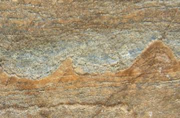 Los fósiles hallados en las rocas de Groenlandia