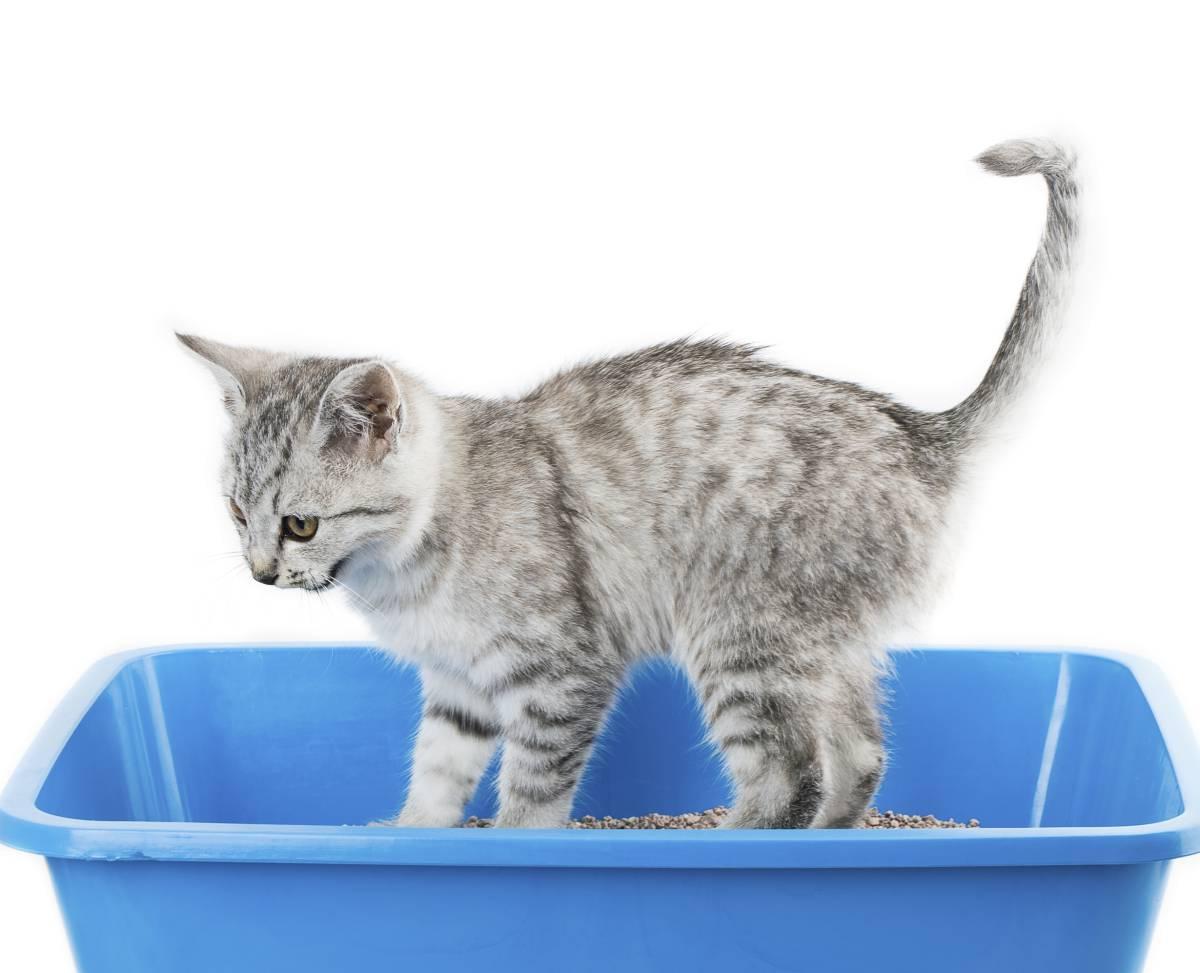 sangre de gato en la orina dificultad para orinar