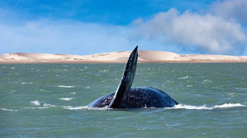 Grandes animais do oceano estão se extinguindo como nunca antes na história do planeta.