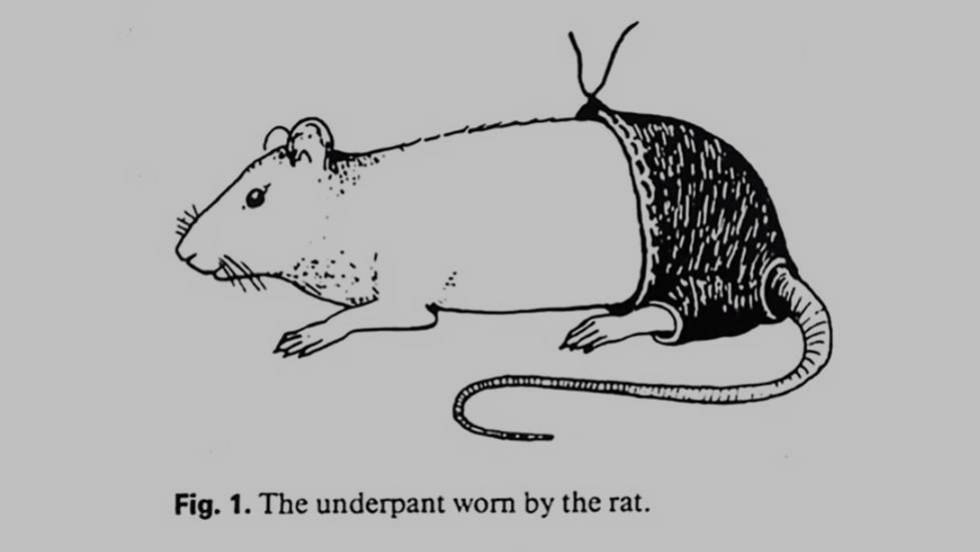 Las ratas que vestían pantaloncitos para poner a prueba su vida sexual