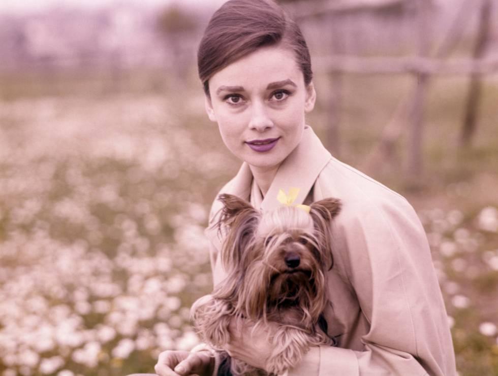 Trabajó Audrey Hepburn para la resistencia en la II Guerra Mundial ...