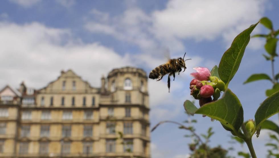 Abeja sobre una flor en un parque en Bath, Inglaterra.rn rn