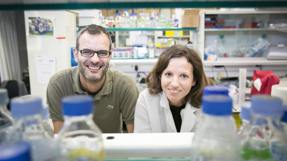 Descubiertas las células que inician la metástasis del cáncer