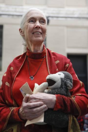 Jane Goodall con su mono de peluche.