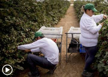 Spain discovers the benefits of berries... to the economy