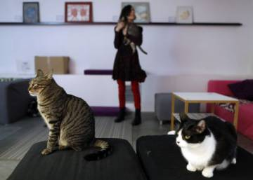 The purrfect cup of coffee? Inside Madrid's cat café