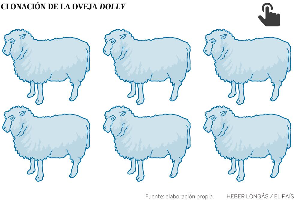 20 anos da ovelha Dolly: por que os clones morrem jovens?
