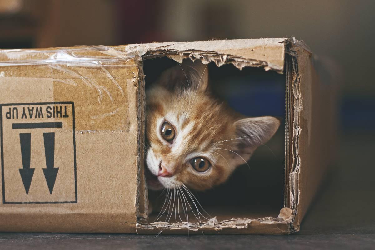 cosas raras sobre los gatos
