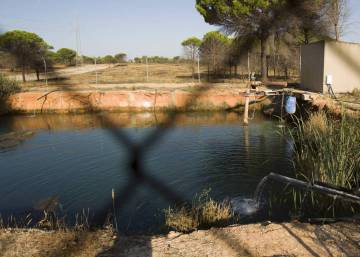 Madrid blames climate change for deterioration of Doñana preserve