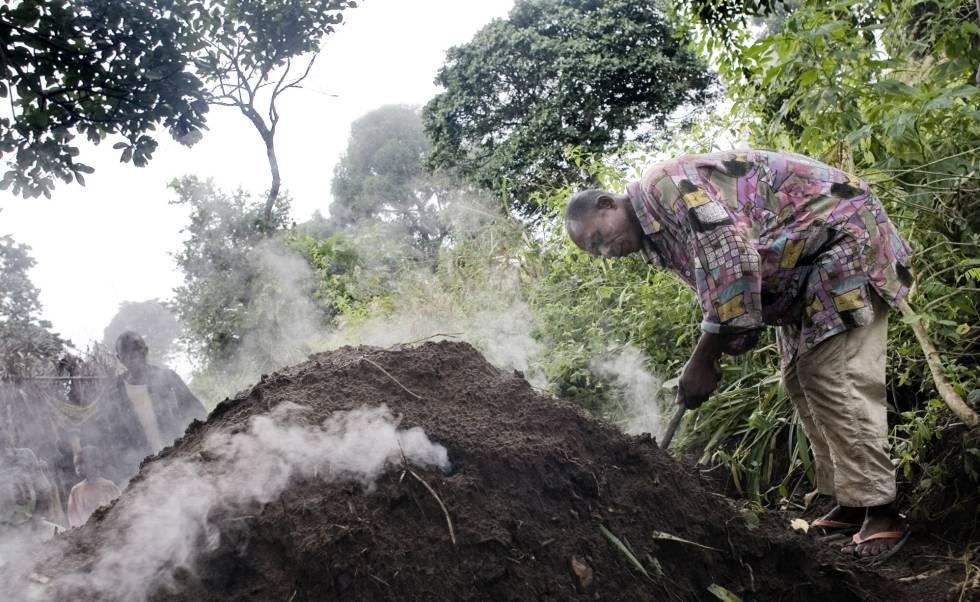 Reverdecer La Leña Y El Carbón Vegetal Planeta Futuro El