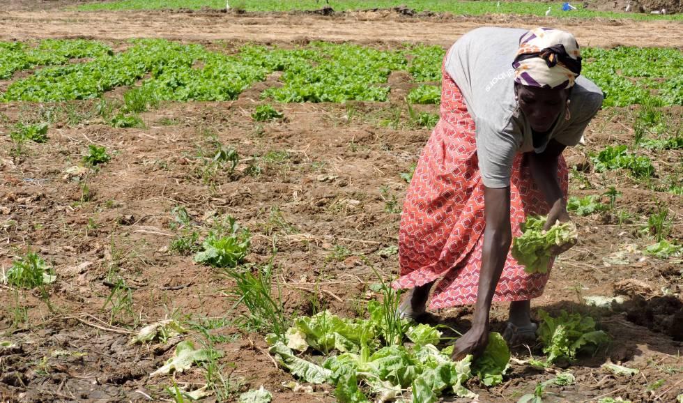 """""""Aquí nos pagan muy poco por nuestros productos"""", se queja Rosalie Nekarmbaye, que cría sola a sus cinco hijos, todos en edad escolar."""