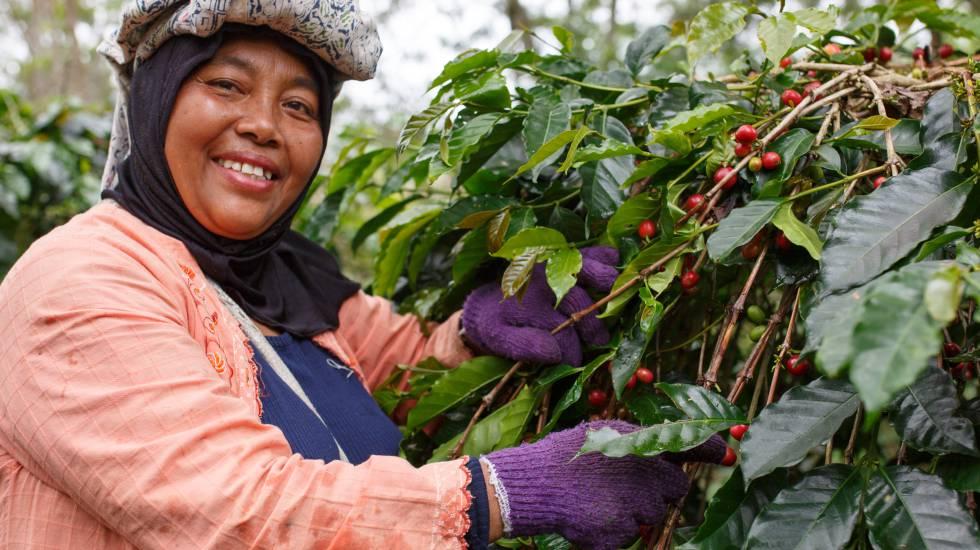 Por qué optar por el comercio justo?   Blog Alterconsumismo   EL PAÍS