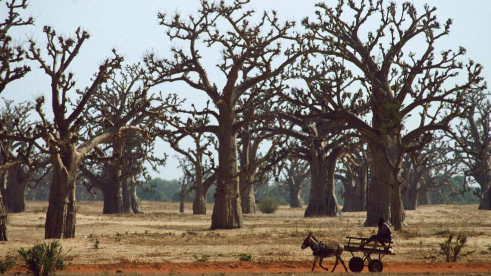 Las tierras secas ocultan un bosque tan grande como la selva amazónica