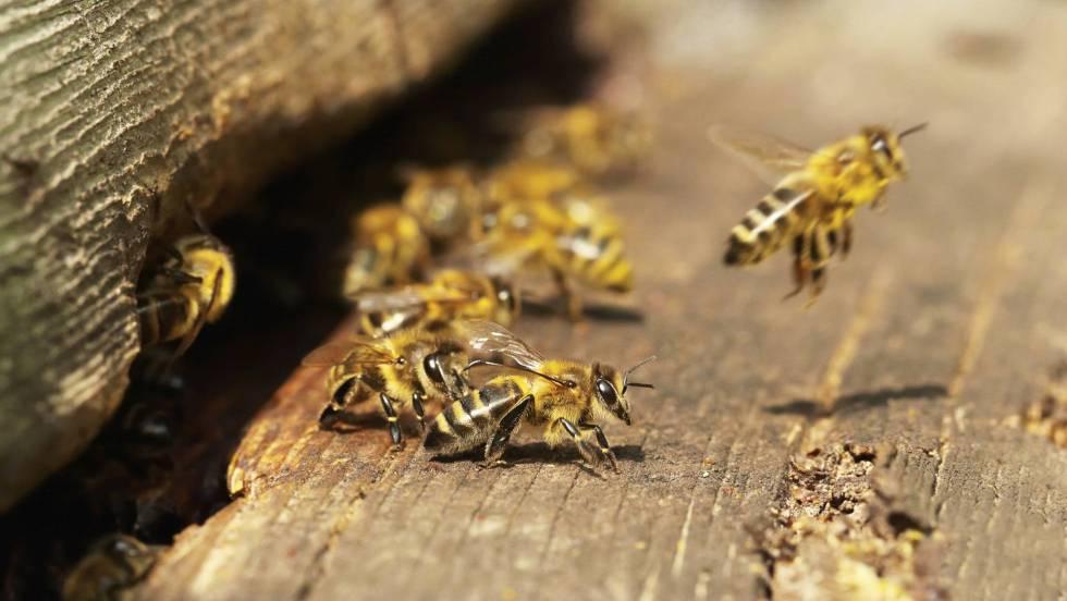¿Qué está ocurriendo con las abejas?