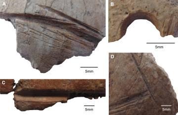 Los fragmentos de cráneos con cortes y agujeros