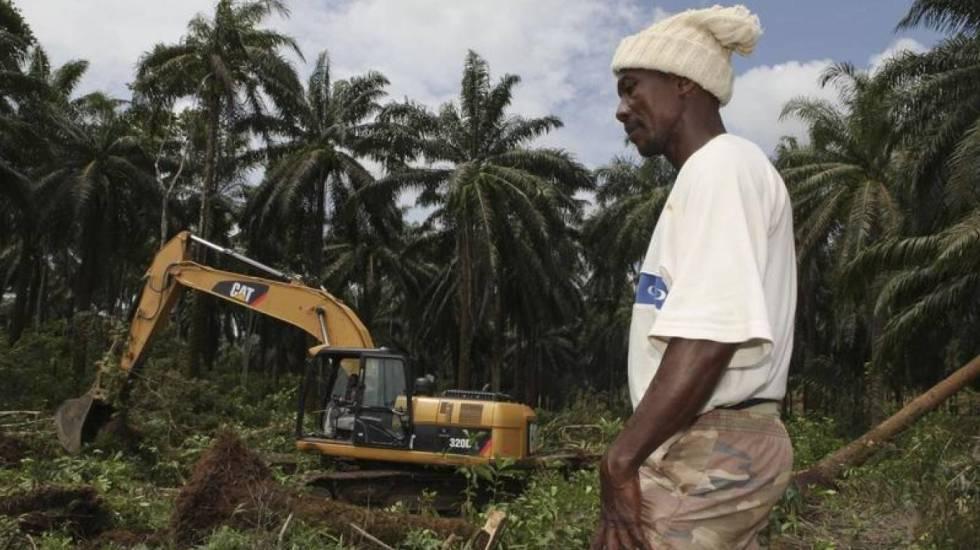 Destrucción de la selva para proyecto agroindustrial en el norte de Sierra Leona.rn rn rn rn rn rn