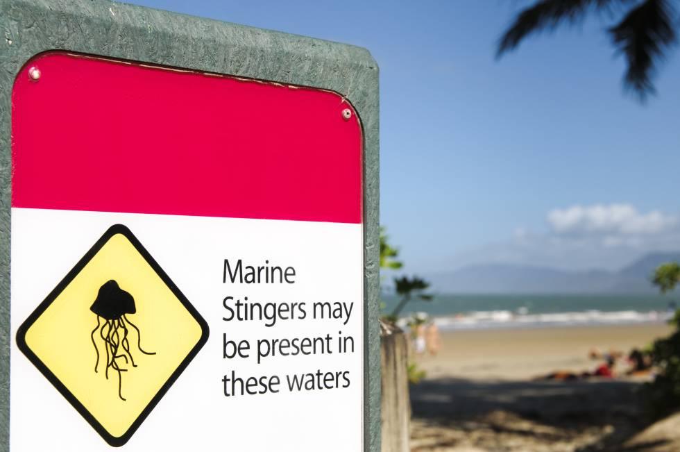 """Aviso da presença de cubomedusas (""""marine stingers"""") numa praia do norte da Austrália."""