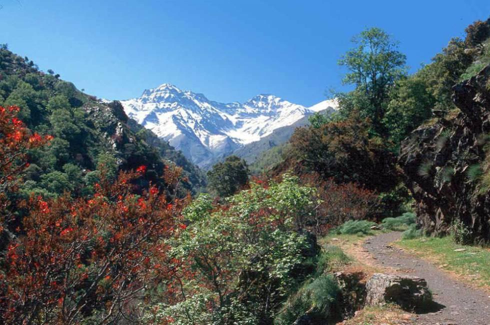 Vereda de la Estrella, un paseo por el 'Himalaya' andaluz