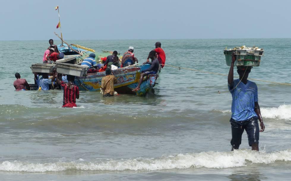 Jóvenes descargan el pescado para llevarlo diretamente a la fábrica china, en Gunjur.