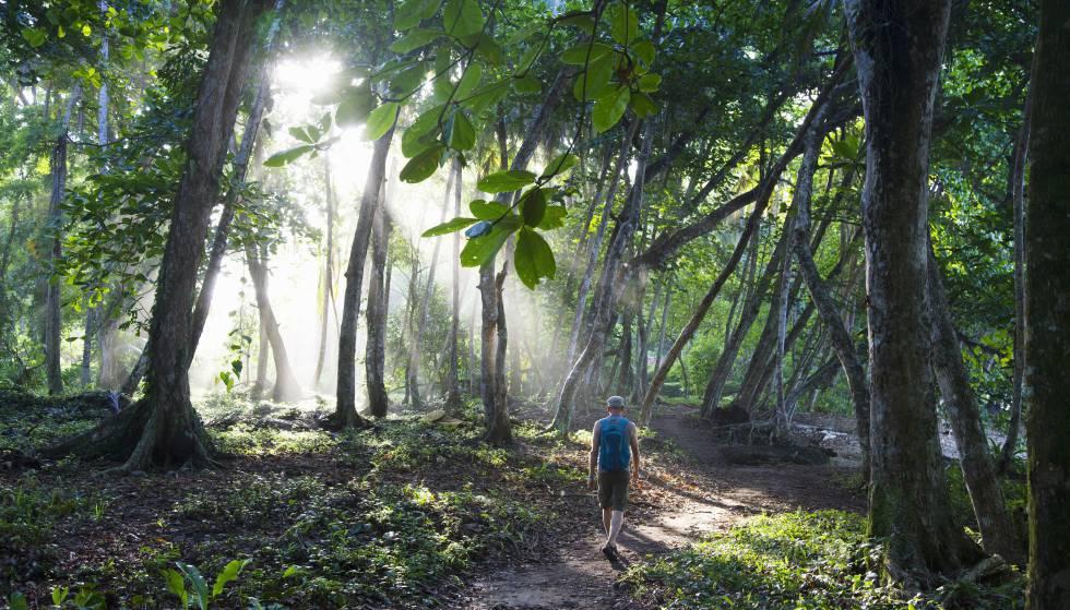 Un senderista camina por la selva de Costa Rica.