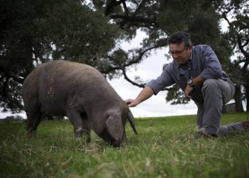 Spain's pig aristocracy emigrates to Texas
