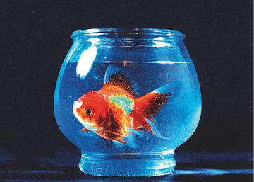 Disco ICON recomendado: 'Big fish theory', de Vince Staples