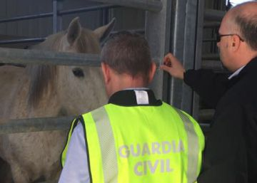 Dozens arrested in Spanish-led raid against horsemeat racket