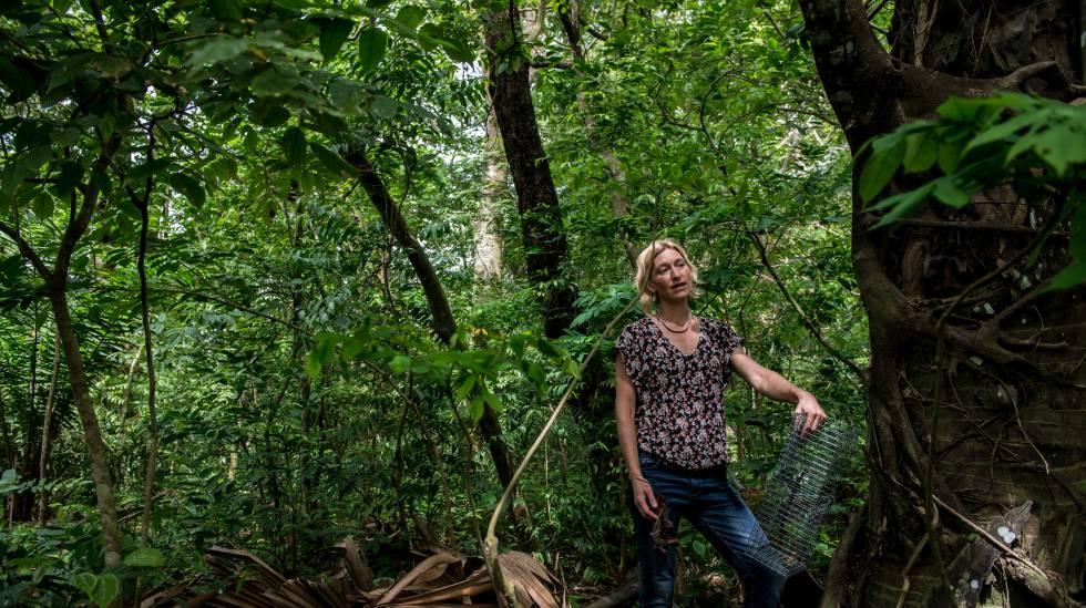 Anne Laudisoit se dispone a colocar una trampa para roedores en Kisangani (RDC).