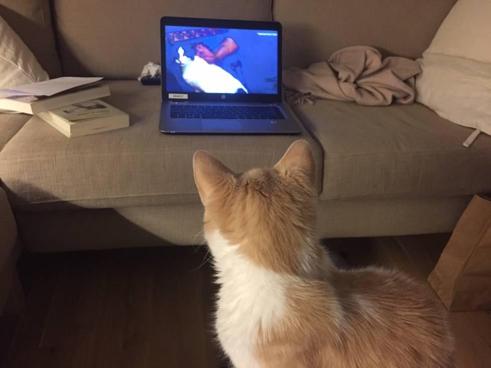 'Mía' viendo su primera película.