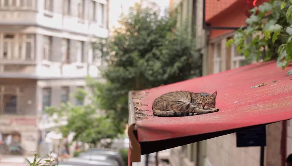 'Mía' y la ciudad donde los gatos tienen su imperio