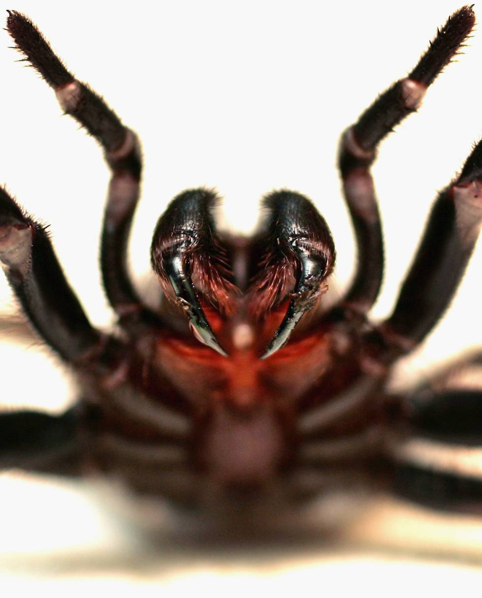 animales de Australia peligrosos