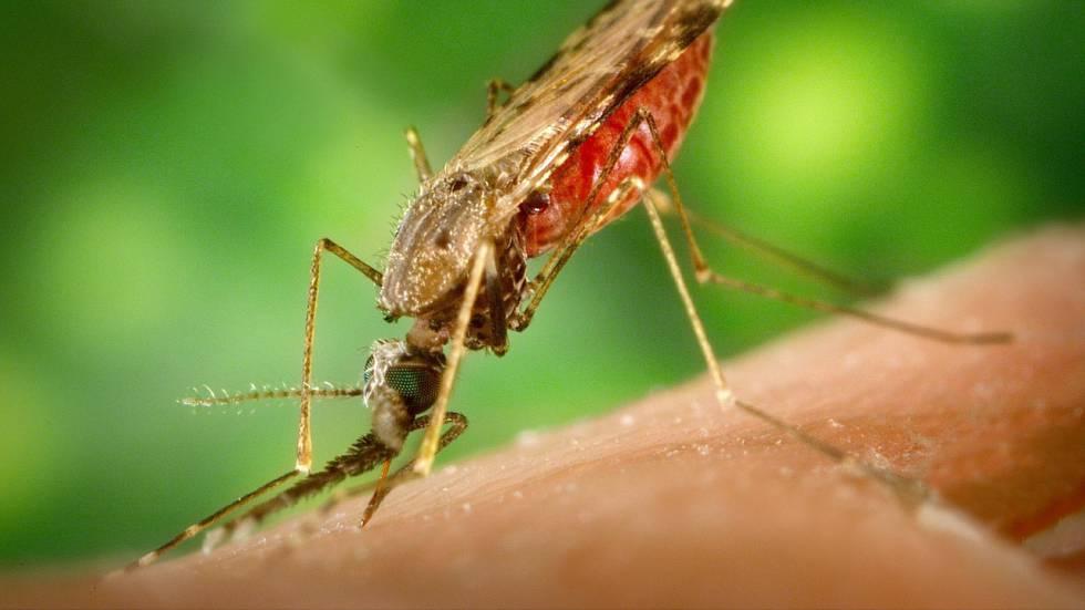 ¿Por qué me eligen los mosquitos?