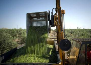 Olive groves present new power source