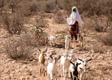 Los refugiados climáticos de Somalia ya no pueden esperar mucho más