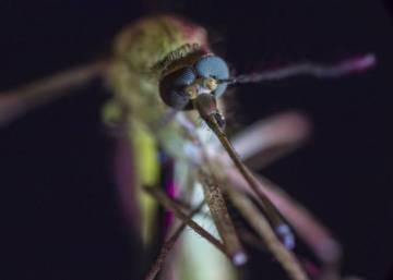 El calentamiento global da alas a los mosquitos