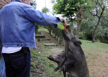 Wild boars close in on Spanish city of Oviedo