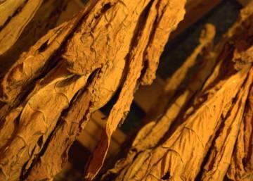 Un informe desvela abusos en la industria del tabaco en Bangladesh