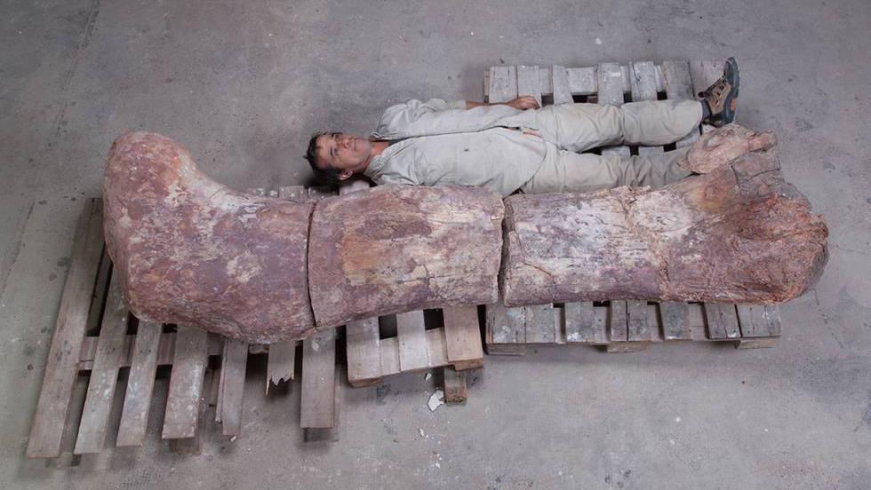 El titán patagónico, el animal más grande que ha pisado la Tierra
