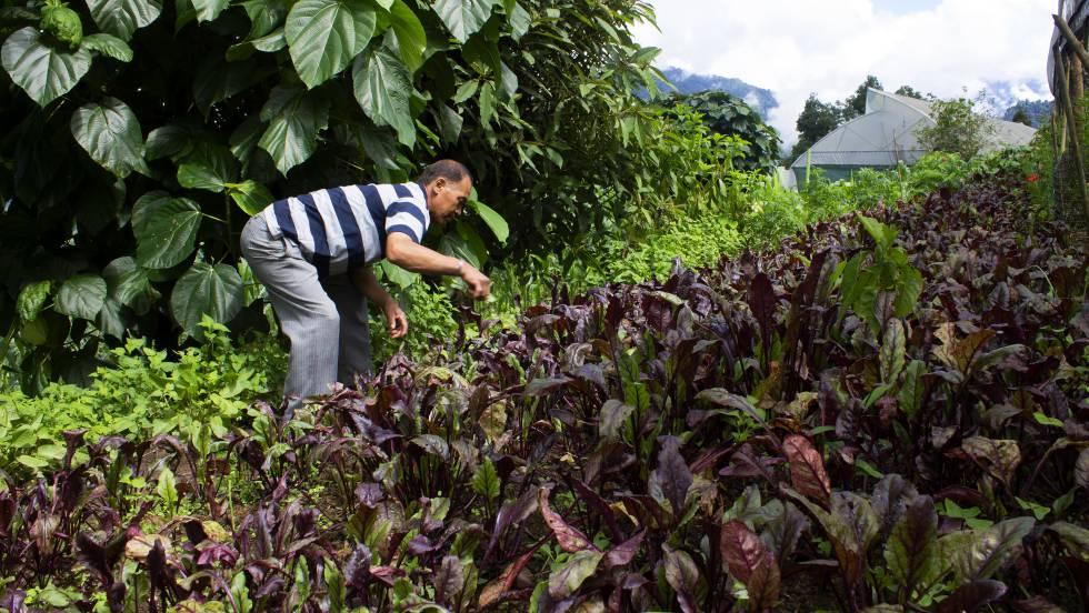 Agricultura ecolog a sikkim el para so org nico de la - Productos de la india ...