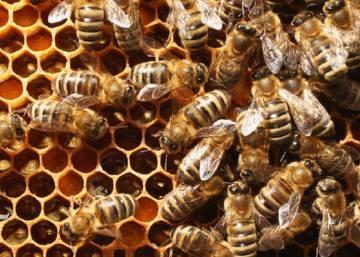 Resultado de imagen para El secreto de la polinización se halla en el cuerpo de las abejas