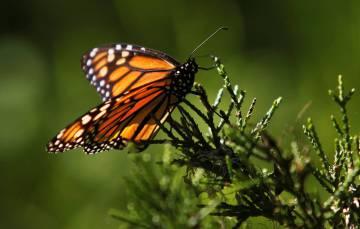 La transformación y destrucción del hábitat es sistemáticamente señalada en todos los estudios como la principal causa de esta hecatombe.