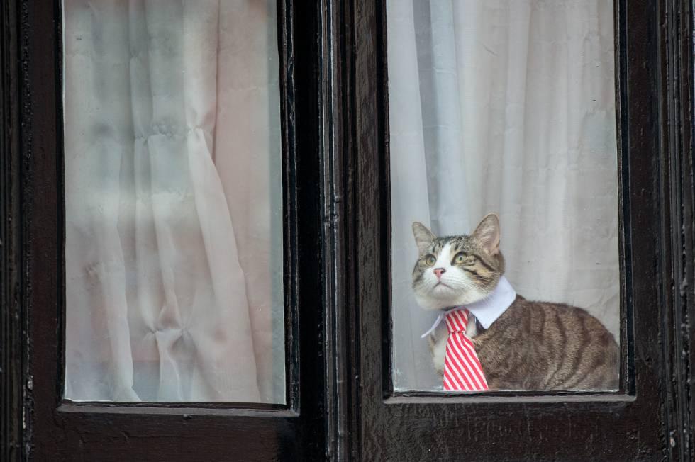 8677ef97733 Uno de los gatos más famosos del siglo XXI: el que vive con Julian Assange