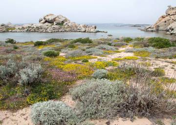 Southern Spain facing desertification if CO2 emissions not brought down