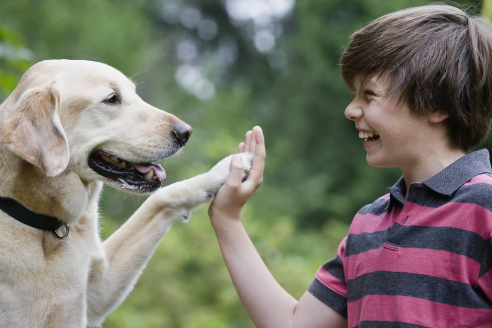 El perro es el mejor amigo del hombre... diabético
