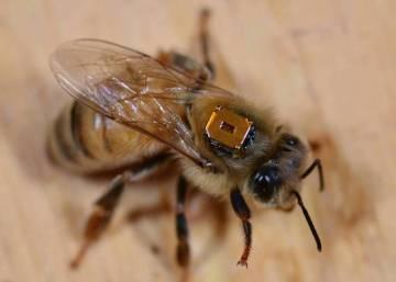 ¿Por qué los pesticidas matan a las abejas en Hungría, pero no en Alemania?